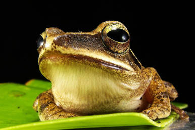 Frog Featured