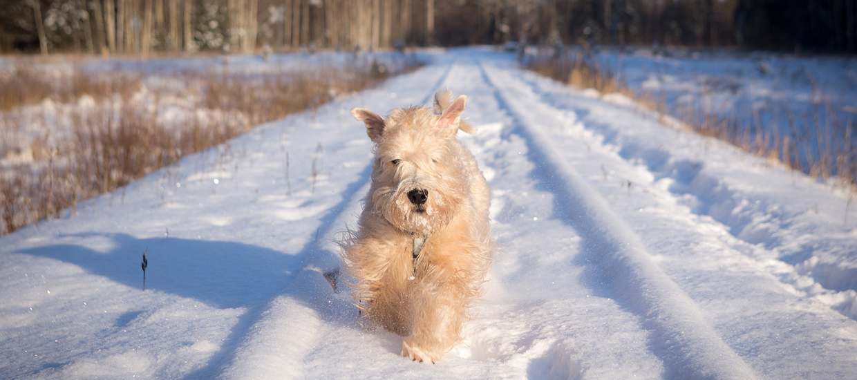 Ways To Protect Your Pet In Any Weather Condition