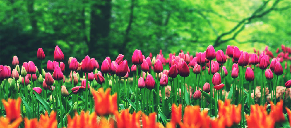The Science of Spring Blooms - weloveweather.tv