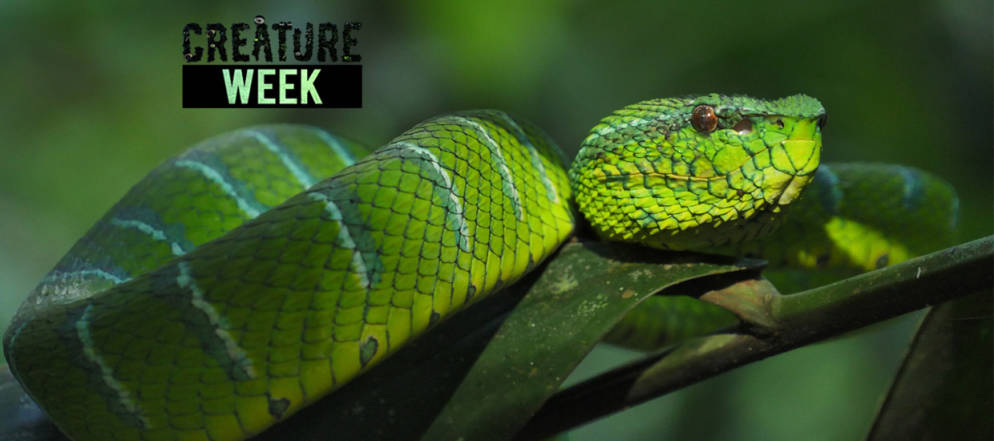 What Climate Change Means For The Snake Population Weloveweather